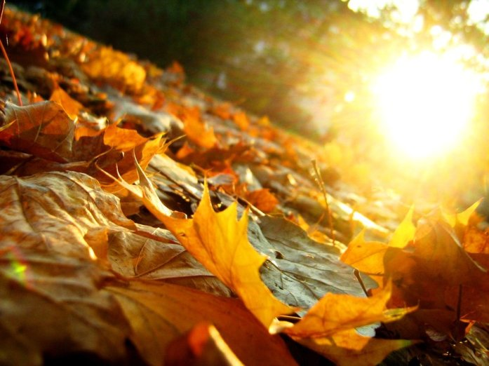 Autumn_Leaves_by_artifexa